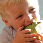 Basic tips on introducing solids